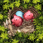 Savings nest and secure investment financial concept as a group of pink piggy banks and a bird egg in a safe tree refuge as a wealth and retirement fund symbol.