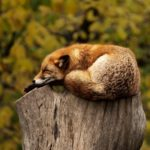 The Importance of Sleep for Our Elders – Winter Edition